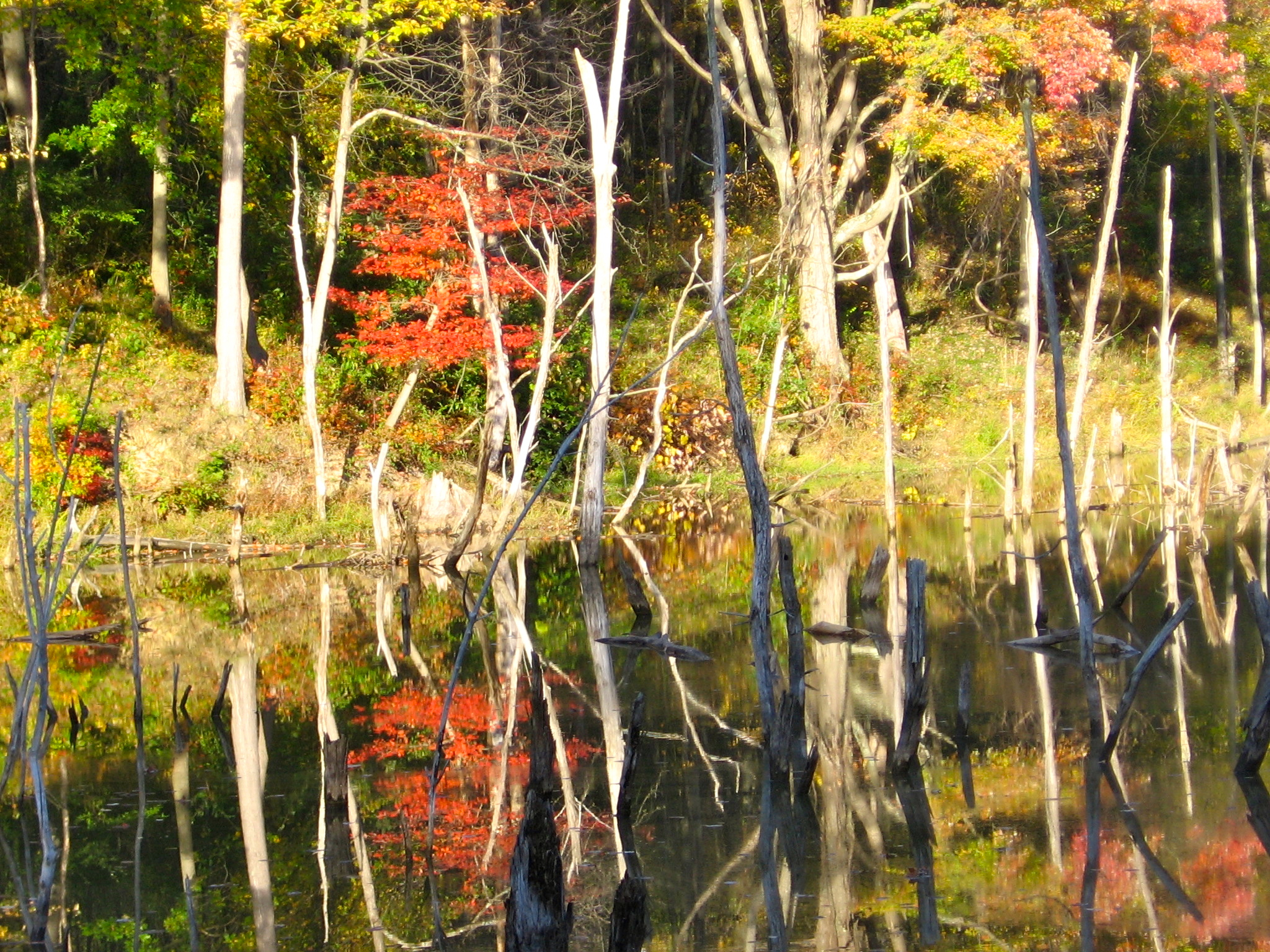 color photo of autumn trees above a calm lake
